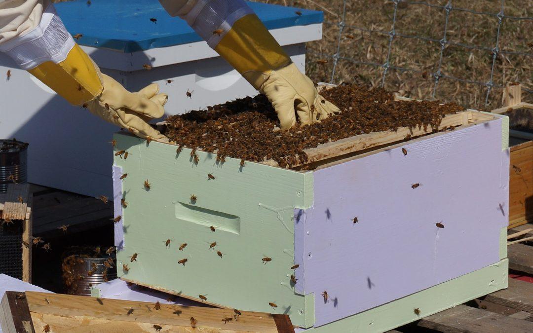 arnia, la casa delle api
