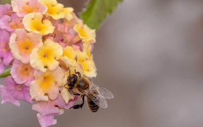 Apiturismo: api e turismo