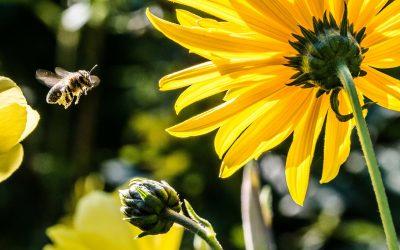 Le api riconoscono il numero 0