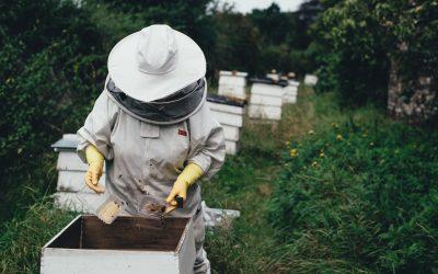 Corsi apicoltura Sardegna