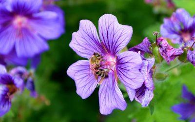 Aprile in apiario