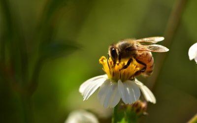 Maggio in apiario