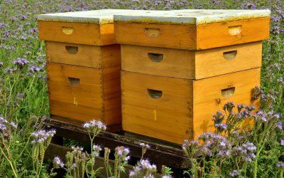 Come scegliere il posto per l'apiario?