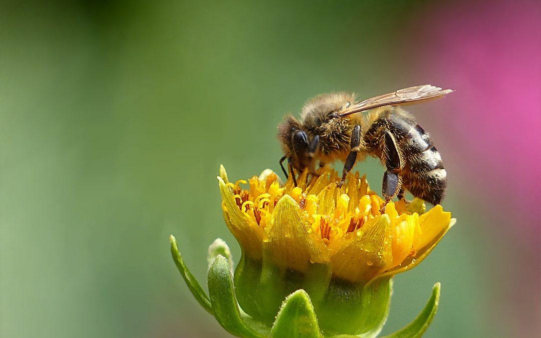 Il 2019 per le api
