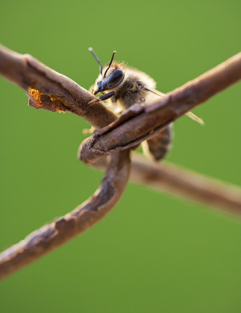 Veleno d'api